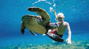 Cancun Adventure - Nado con tortugas en la bahía de Akumal