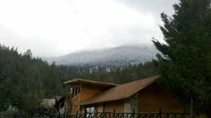 Experience Monterreal Forests