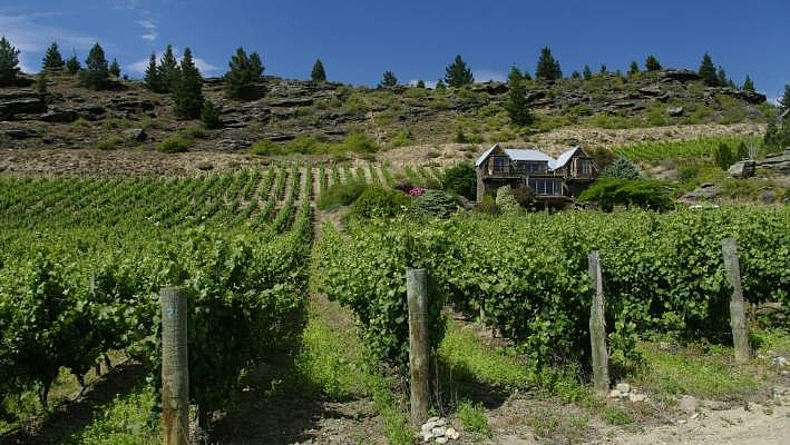 Black Ridge Vineyard
