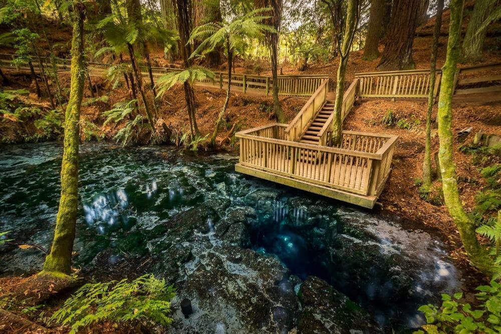 Hamurana Springs