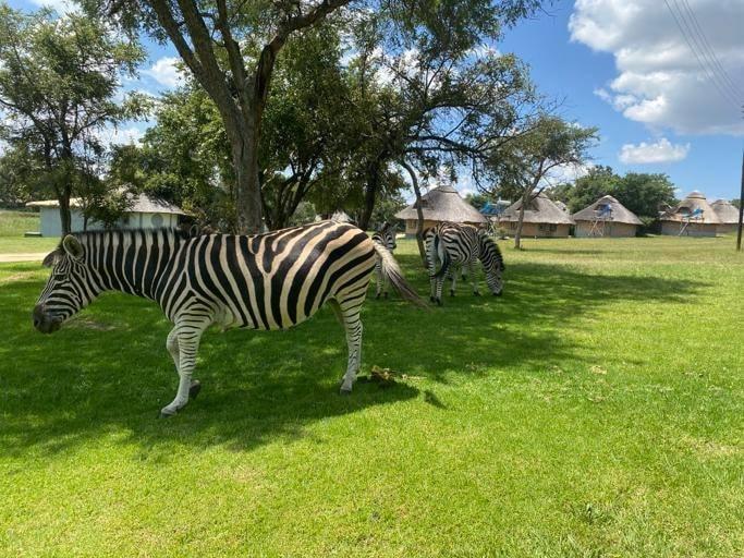 Nyati Eco Game Park