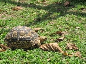 The Twala Trust Animal Sanctuary