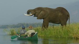 Fuhara Safaris