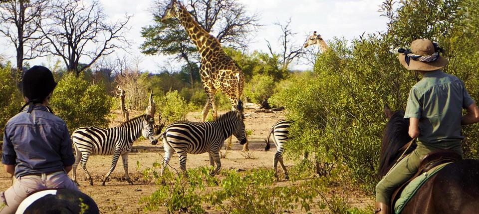 Zambezi Horse Safaris