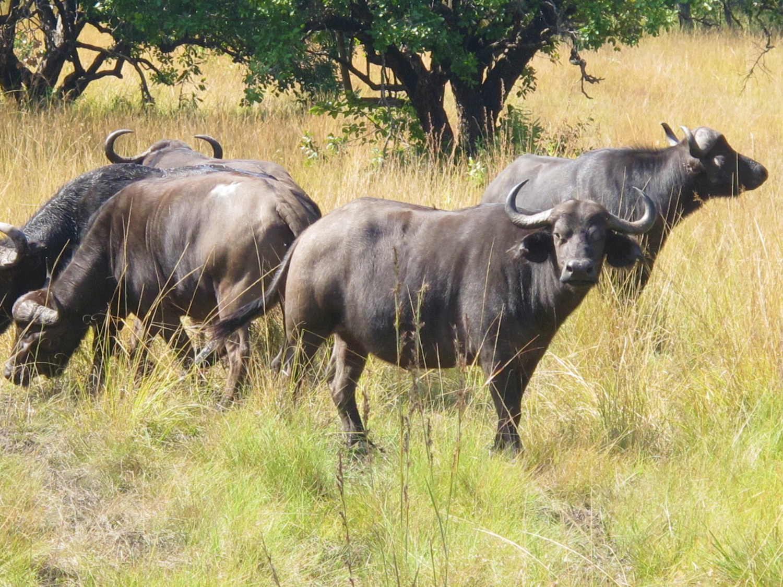 Bushman Rock Safaris 2 Night weekend Special
