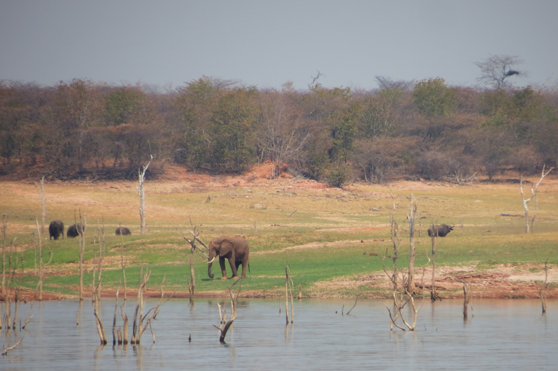 Great Deal At Musango Safari Camp