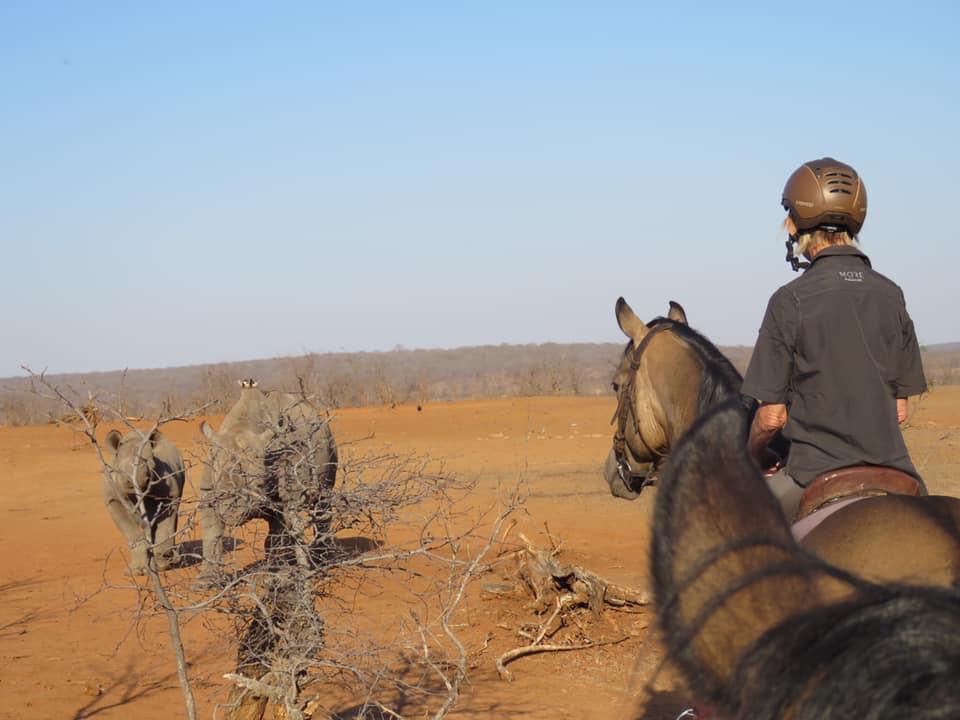 Zambezi Horse Safaris Post Lockdown Special