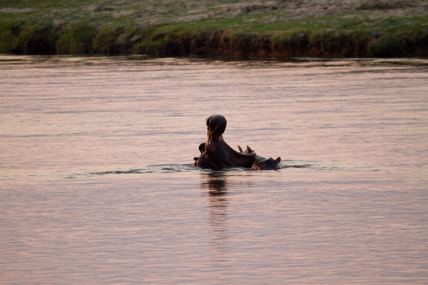 Zimparks Mana Pools Father and Son Expedition