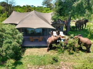 Wild Horizons Honeymoon Special 2021