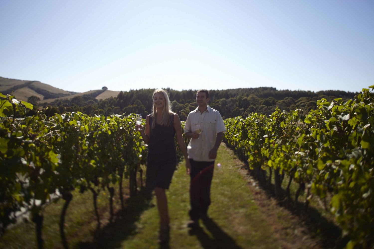 Mornington Peninsular Wine, Cheese & Chocolate Tour