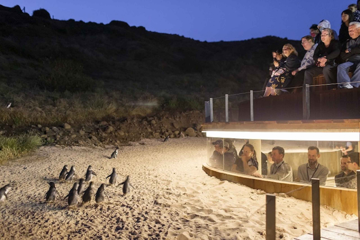Best Penguin Parade tours to Phillip Island