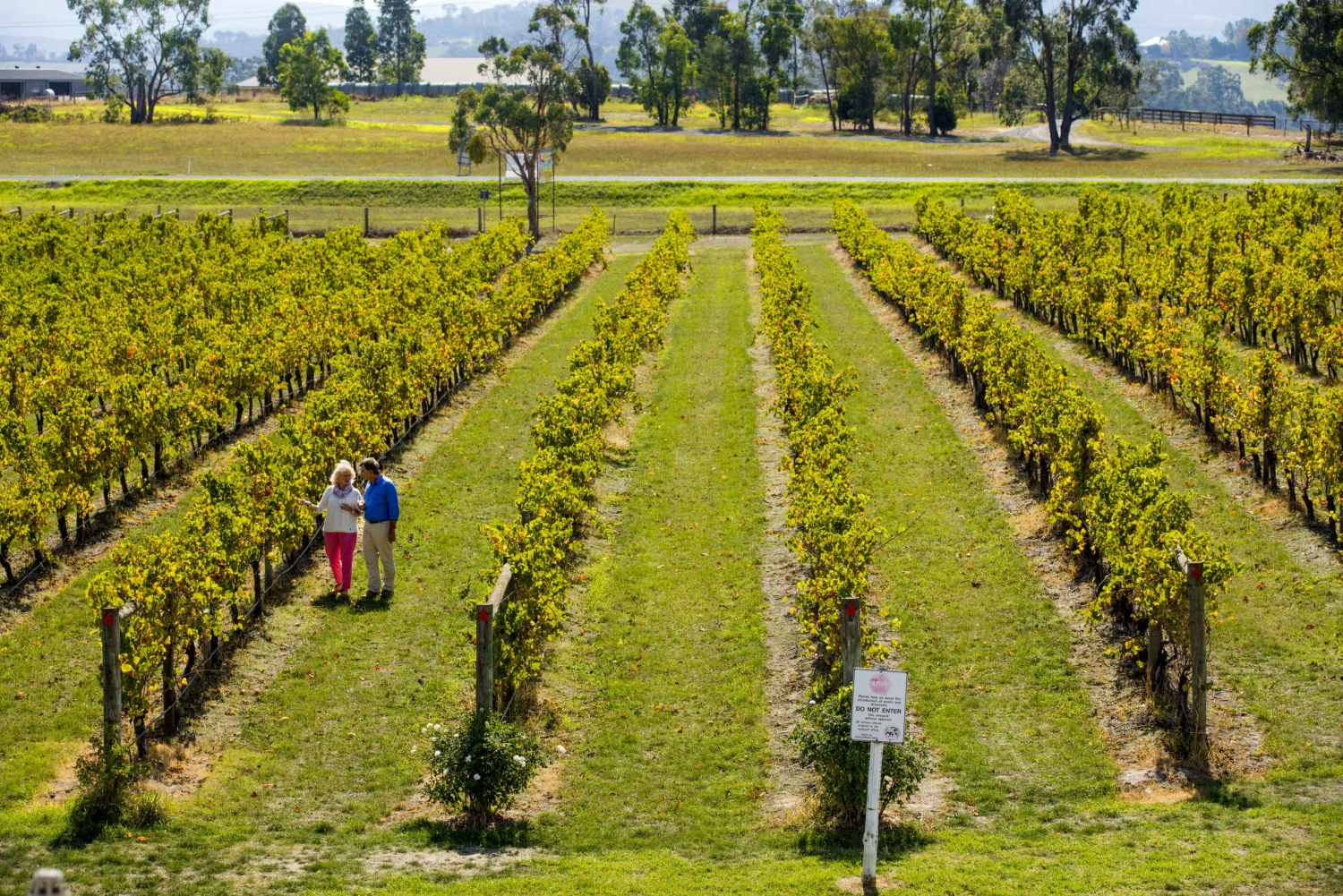 Puffing Billy & Yarra Valley Wineries With Lunch