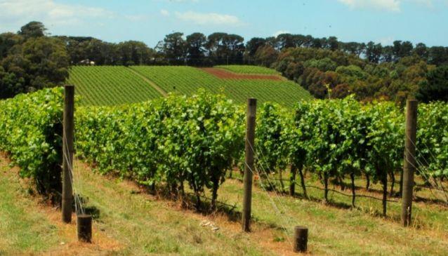 Best Wineries Mornington Peninsula