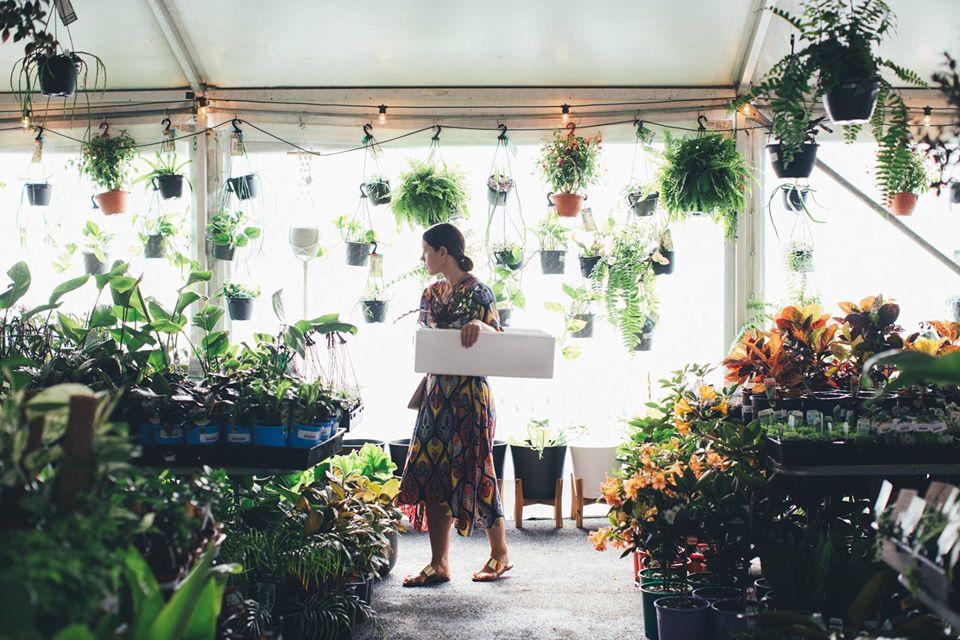 Geelong Virtual Pop-up Shop - Huge Indoor plant sale
