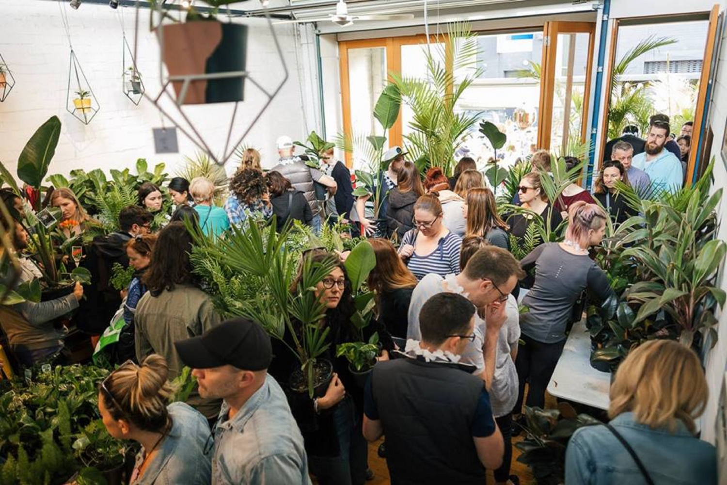 Huge Indoor Plant Warehouse Sale - Rare Plant Party - Melbourne