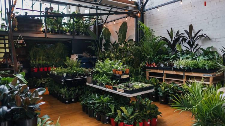 Huge Indoor Plant Warehouse- Winter Snow Party - Melbourne