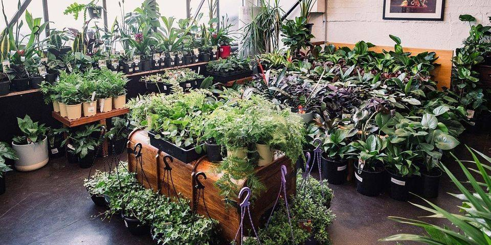 Melbourne - Huge Indoor Plant Sale - Rumble in the Jungle