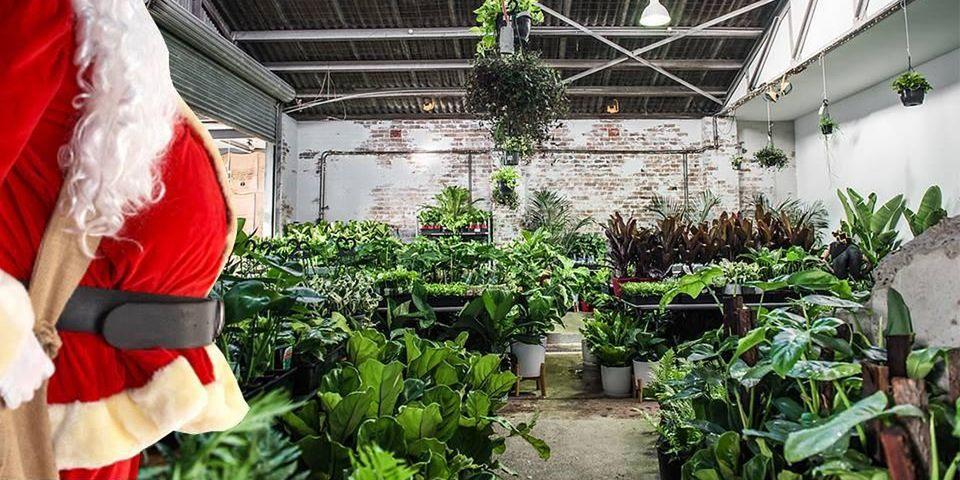 Melbourne - Huge Indoor Plant Warehouse Sale - Christmas in July
