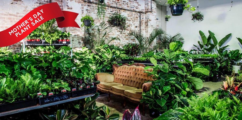 Melbourne - Huge Indoor Plant Warehouse Sale - Mothers' Day Plant Sale