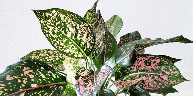 Melbourne - Huge Indoor Plant Warehouse Sale - Pink Plant Party