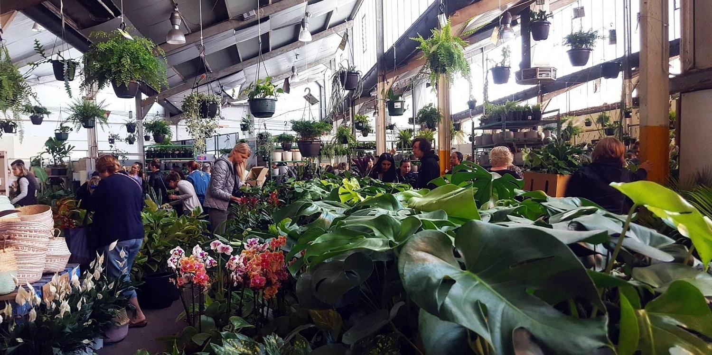Melbourne - Huge Indoor Plant Warehouse Sale - Safari Party