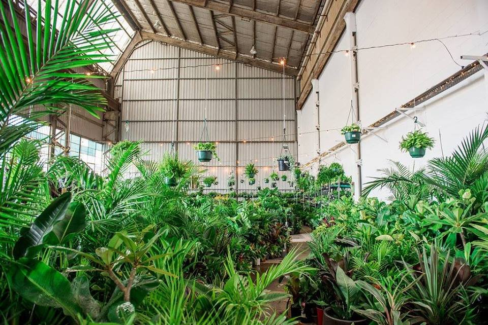 Melbourne - MEGA Indoor Plant Warehouse Sale in the Burbs!