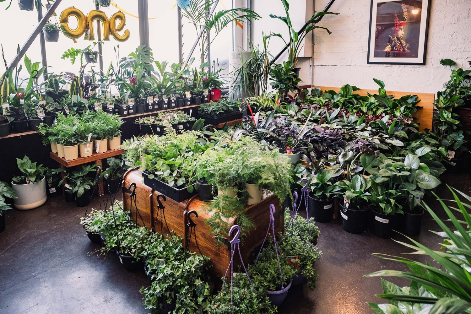 Melbourne Virtual Pop-up shop - Huge Indoor Plant Sale