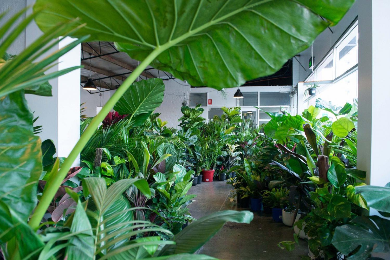 Mentone - MEGA Indoor Plant Warehouse Sale - Tropicana Party