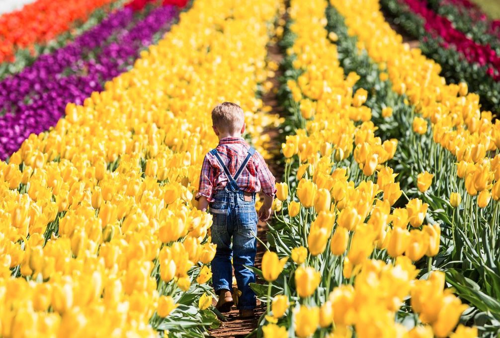 Tesselaar Tulip Festival's Children's Days