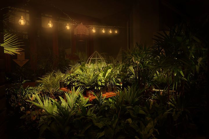 Twilight Indoor Plant Warehouse Sale - Jungle by Moonlight