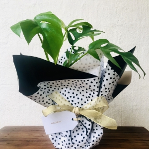 The Indoor Plant Co - <br />FREE DELIVERY ACROSS MELBOURNE
