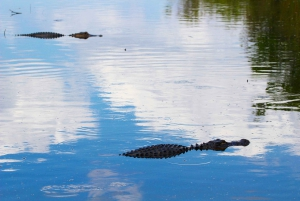 Everglades National Park: Airboat Tour and Wildlife Show