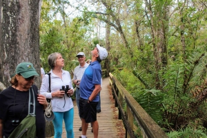 Florida: 1-Hour Everglades Airboat Ride and Nature Walk
