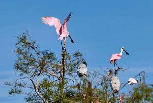 Florida Everglades Small Group Adventure Tour