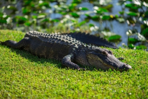 From  Everglades Park Airboat Ride & Wildlife Show