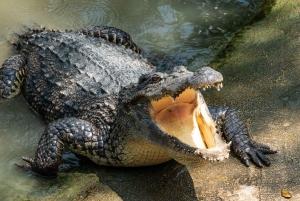 Miami: Half-Day Everglades Tour in French
