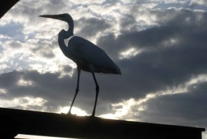 Sawgrass Recreation Park: 1-Hour Airboat Night Tour