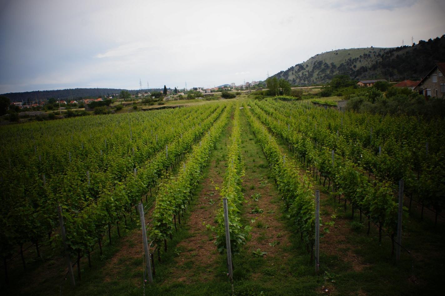 Winery Krgovic