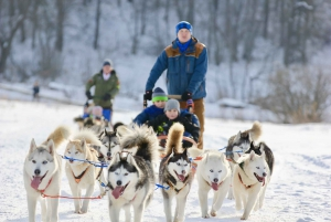 From Dog-Sledding Tour with Husky Farm Visit