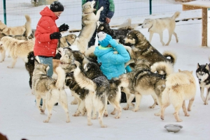 From Moscow: Dog-Sledding Tour with Husky Farm Visit