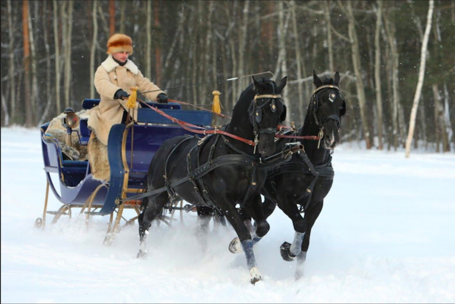 Kuskovo Park Horse Drawn Sled Ride