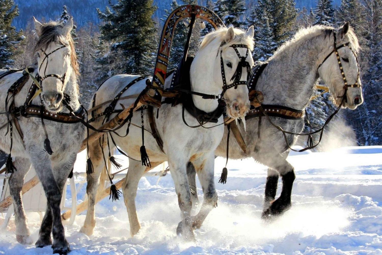 Moscow Aksakovo 2-Hour Troika Ride Experience