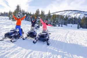 Snowmobile Forest Safari Adventure