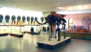 The Palaeontological Museum