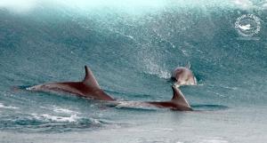 Dolphin Encountours Research Center
