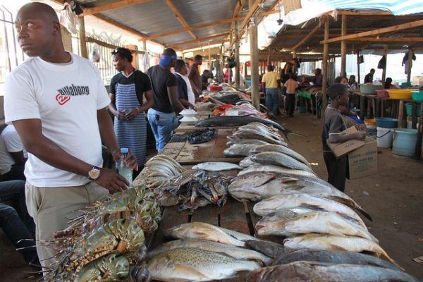 Fish Market - Mercado de Peixe