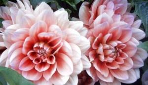 Flowerciti