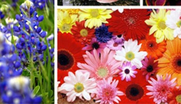 Padma Florist & General Stores