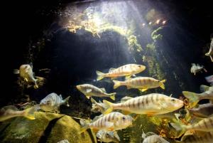 Munich: Day Ticket to Sea Life