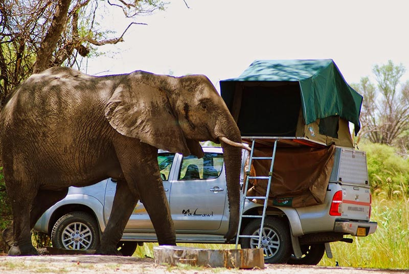 Bocian Safaris Car Hire